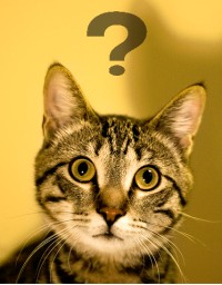 confused_cat